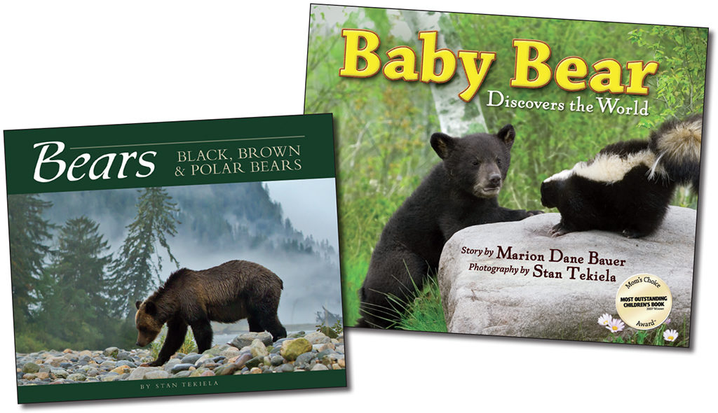 Bears and Baby Bear Discovers the World books