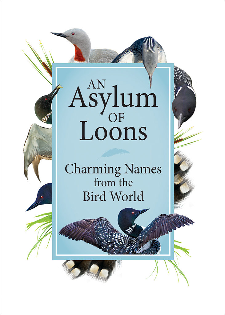 An Asylum of Loons book cover