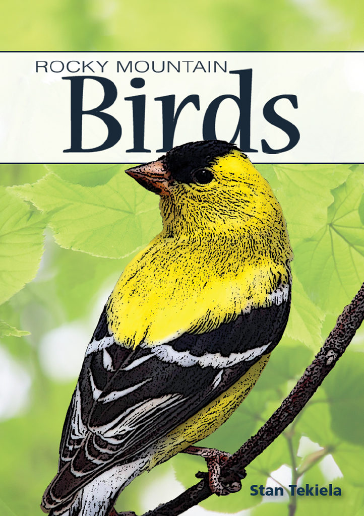Rocky Mountain Birds book cover