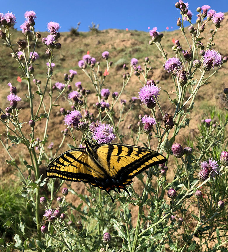 Beautiful butterfly amid wildflowers in Colorado