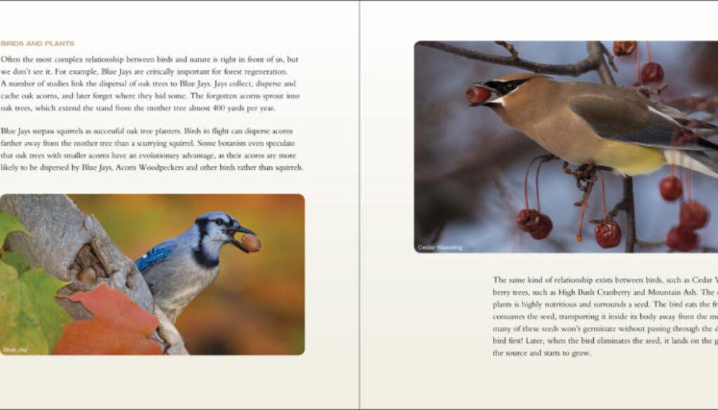 backyard_birds_9781591936411_003_iart.jpg