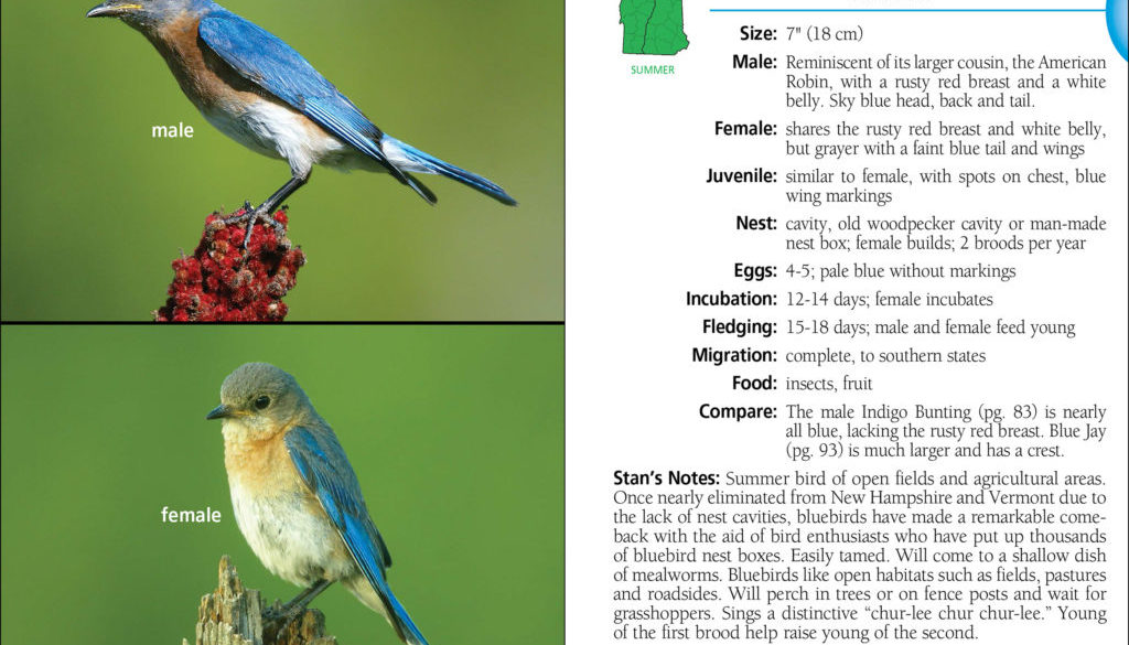 birds_of_new_hampshire_and_vermont_9781591936404_002_iart.jpg