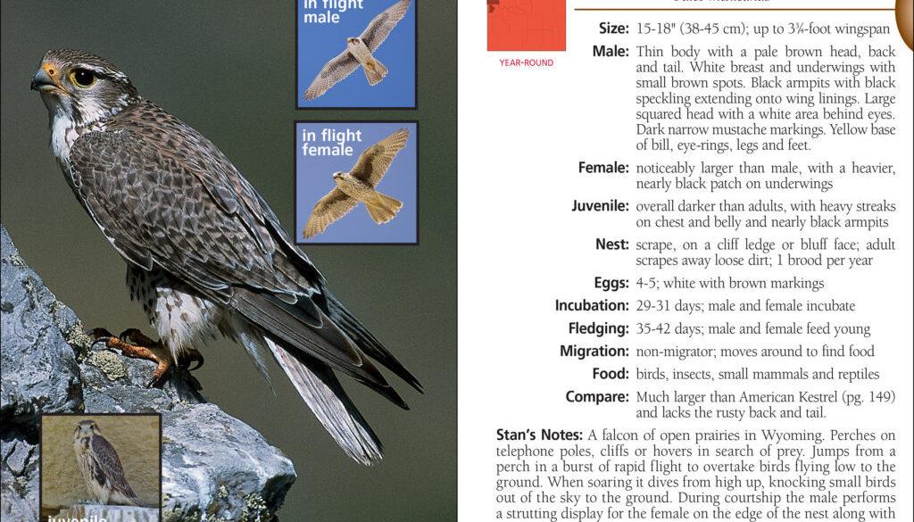birds_of_wyoming_9781591937258_002_iart.jpg