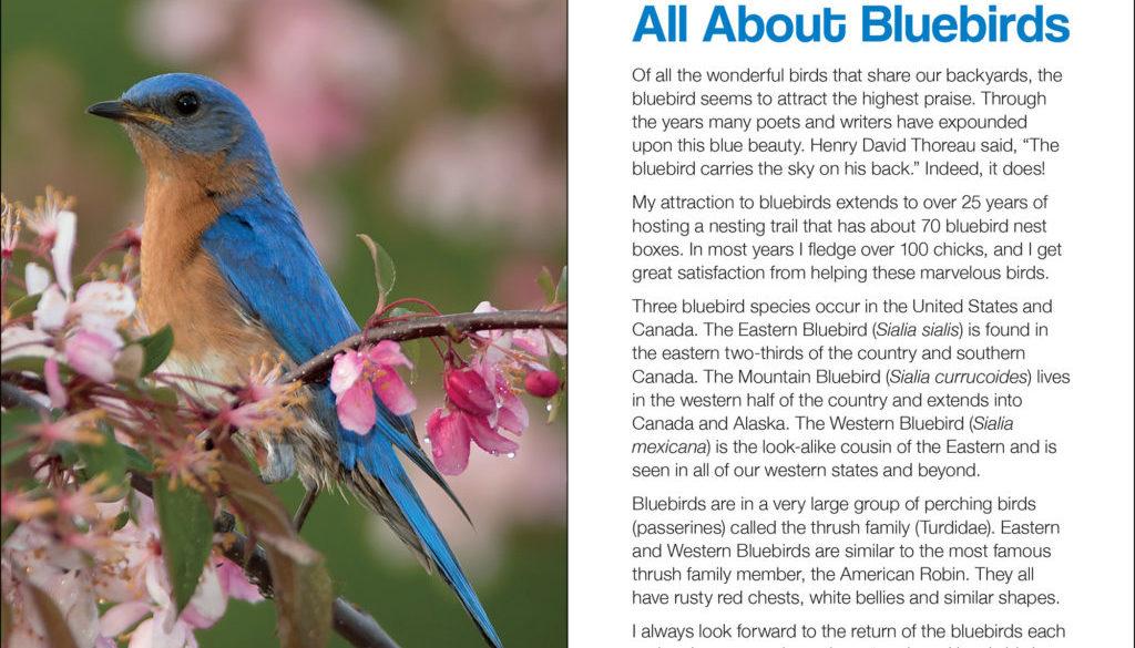 bluebirds_9781591936879_001_iart.jpg