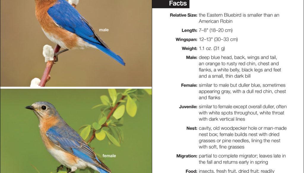 bluebirds_9781591936879_002_iart.jpg