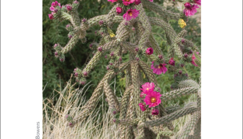 cactus_of_the_southwest_cards_9781591936510_001_iart.jpg
