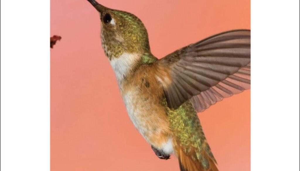 hummingbirds_cards_9781591936954_002_iart.jpg