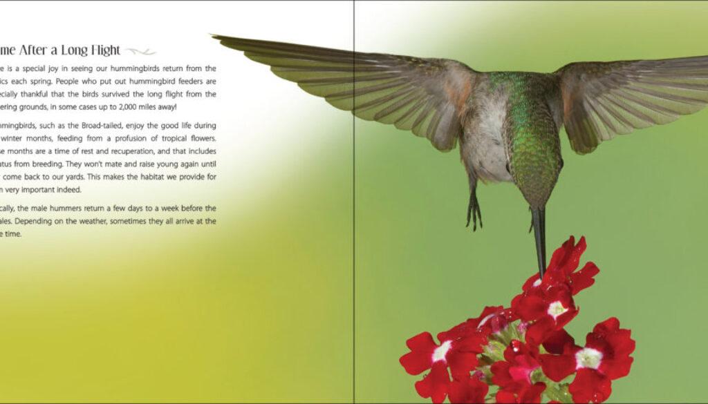 our_love_of_hummingbirds_9781591936886_002_iart.jpg