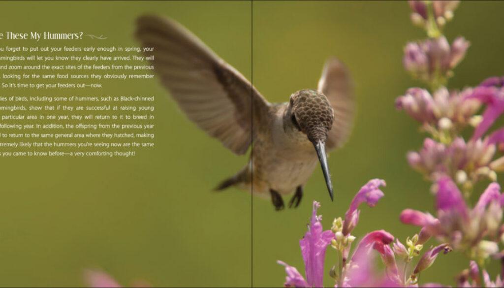 our_love_of_hummingbirds_9781591936886_003_iart.jpg