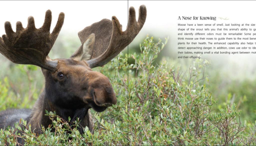 our_love_of_moose_9781591936909_001_iart.jpg