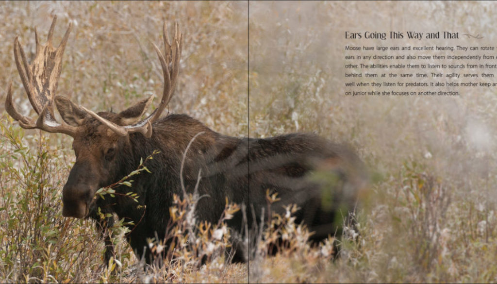 our_love_of_moose_9781591936909_002_iart.jpg