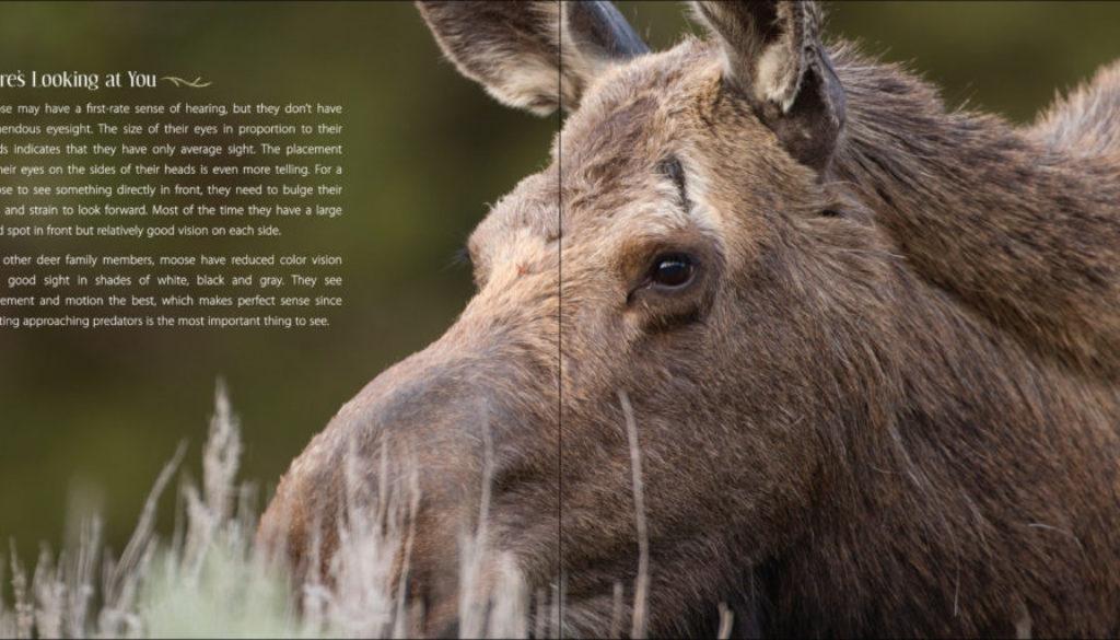 our_love_of_moose_9781591936909_003_iart.jpg