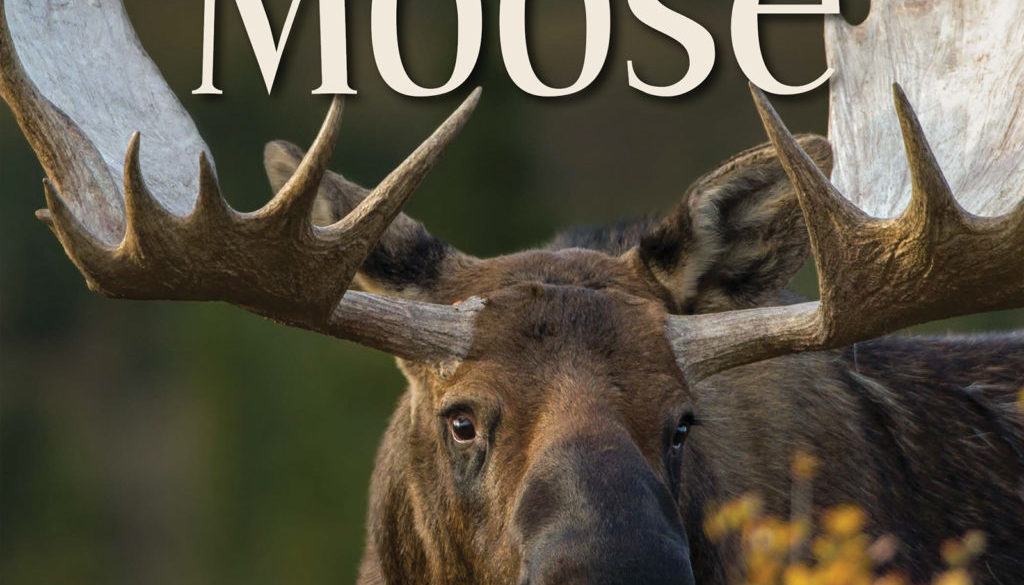 our_love_of_moose_9781591936909_FC.jpg