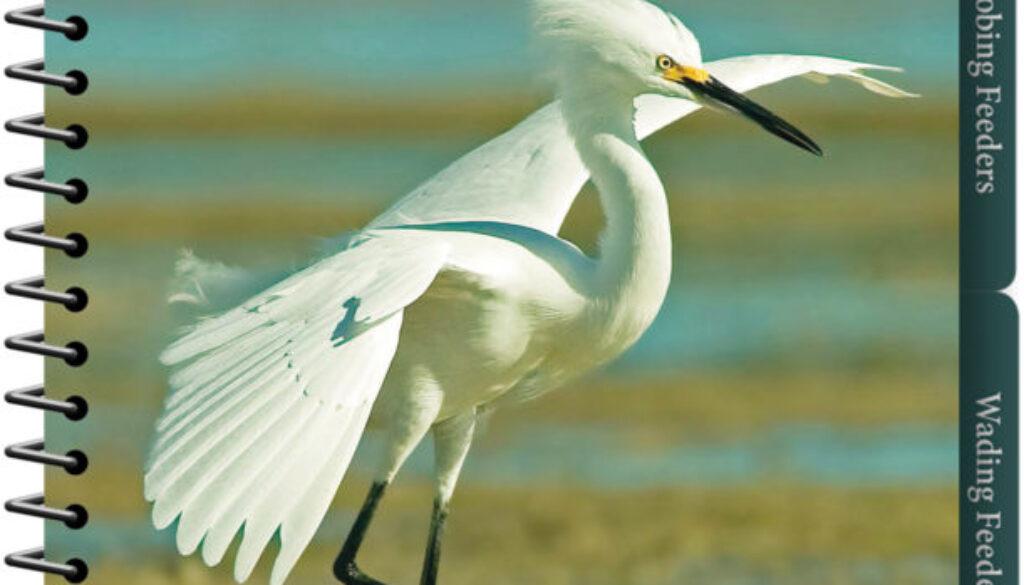 shorebirds_of_the_southeast_and_gulf_9781591936565_FC.jpg