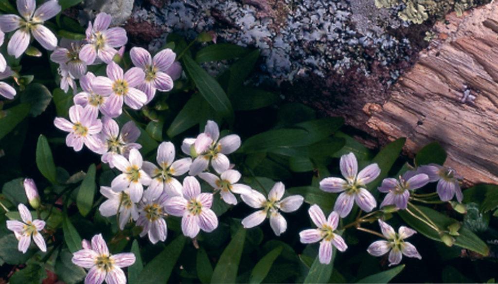 WildflowersAT_feature