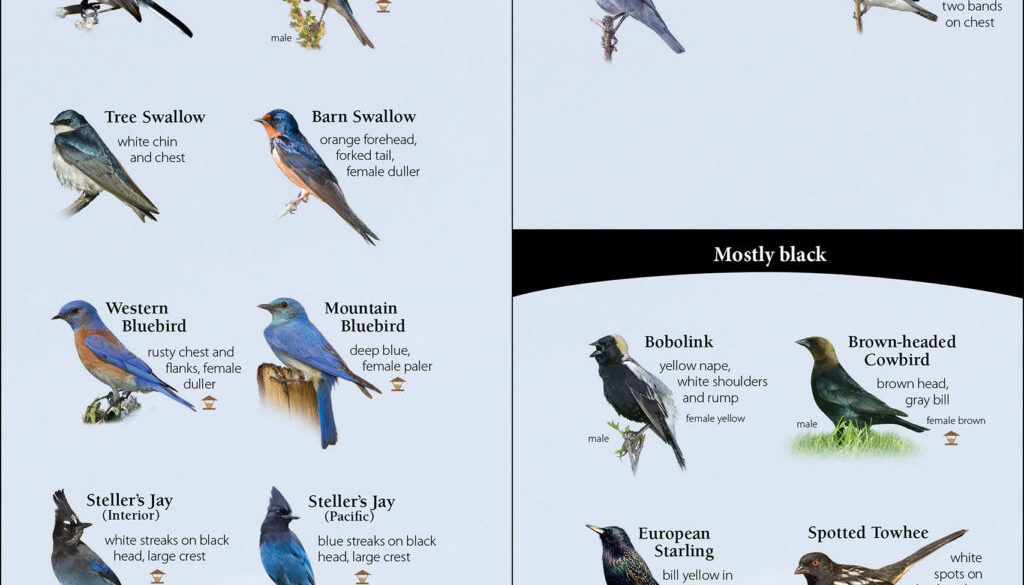 birds_of_the_northwest_9781591934110_001_iart.jpg