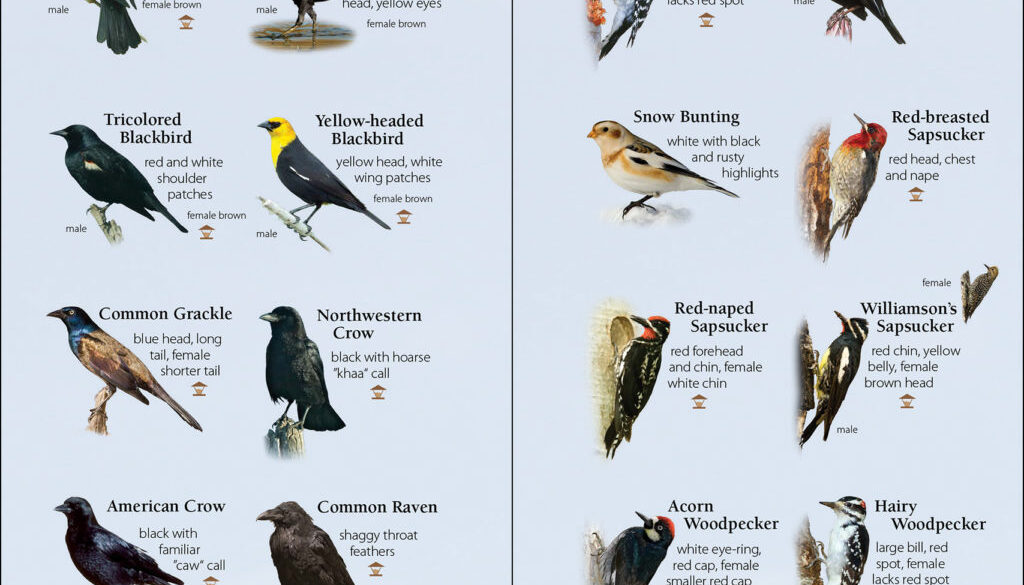 birds_of_the_northwest_9781591934110_002_iart.jpg