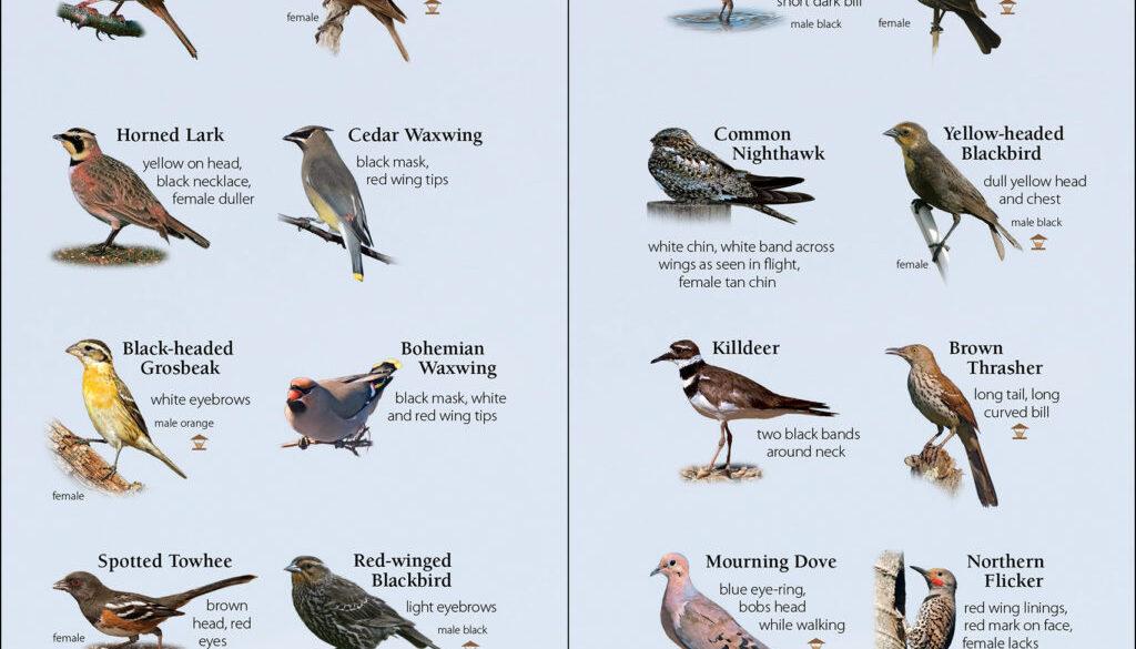 birds_of_the_northwest_9781591934110_003_iart.jpg