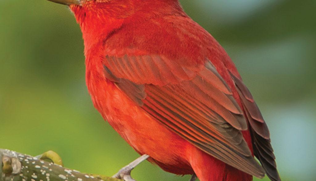 birds_of_the_south_QG_9781647550318_FC.jpg