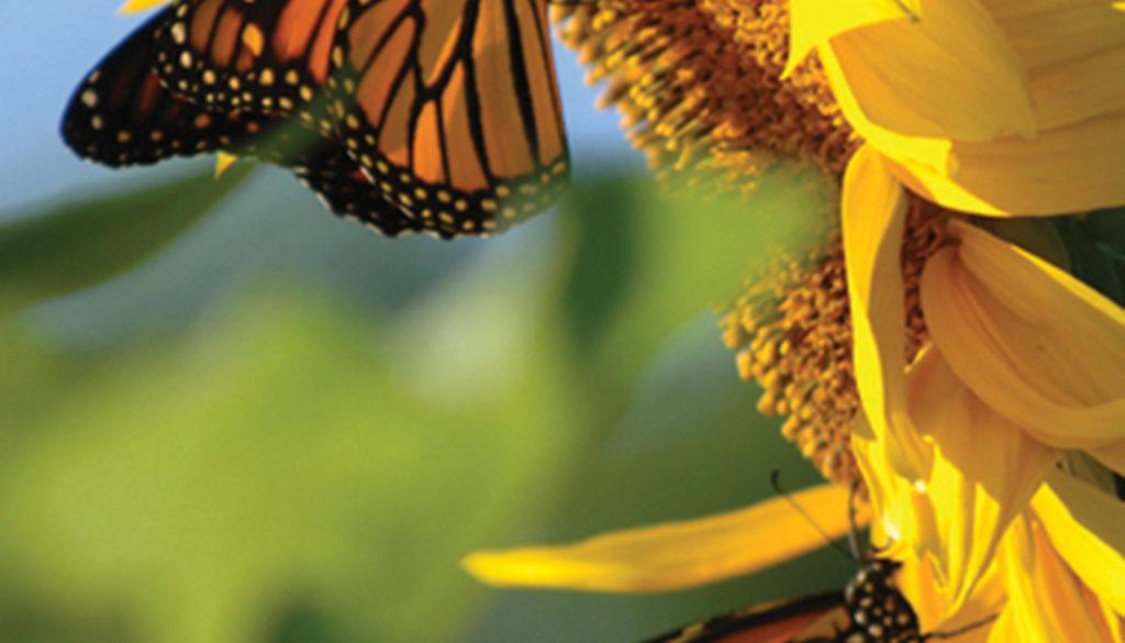 butterfly_sunflower_blank_journal_lined_9781935666400_FC.jpg