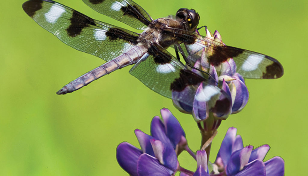 dragonfly_blank_journal_lined_9781935666592_FC.jpg