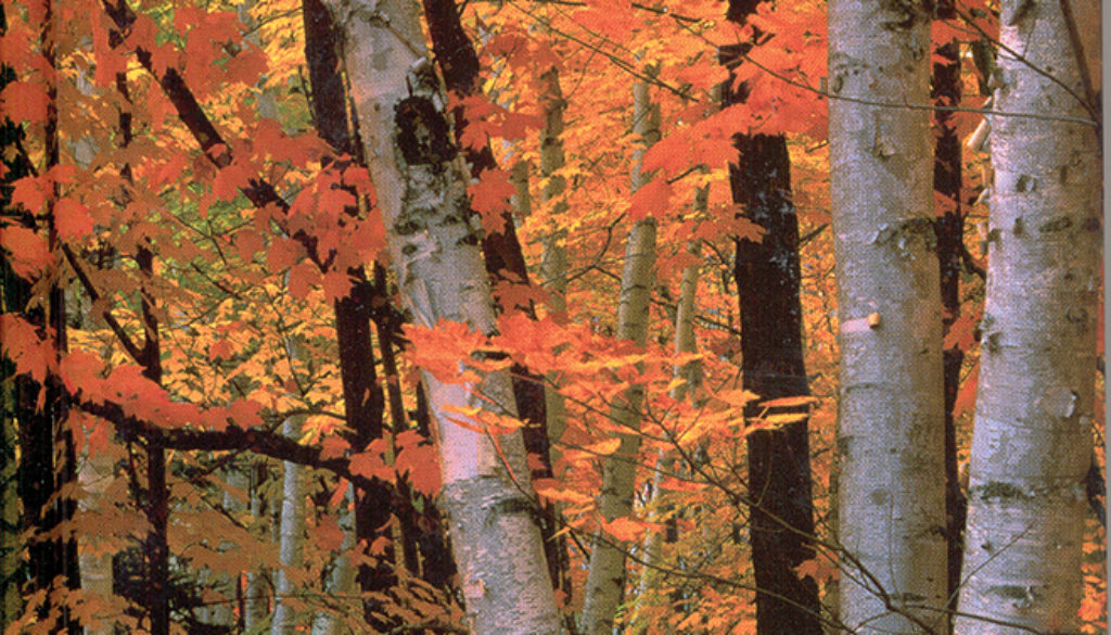 fall_birches_blank_journal_unlined_9781932472196_FC.jpg
