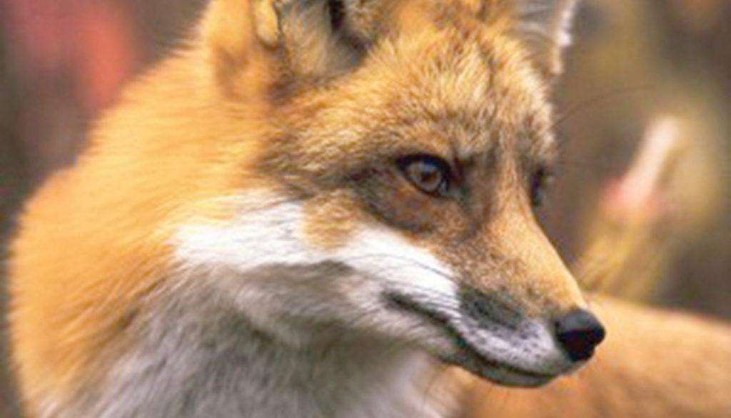 fox_blank_journal_lined_9781935666387_FC.jpg
