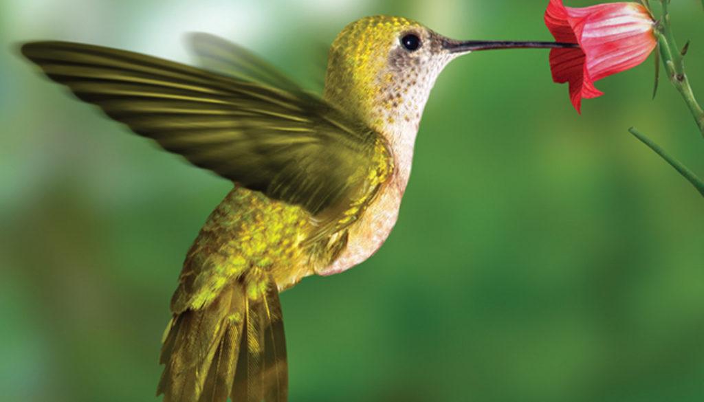 hummingbird_blank_journal_unlined_9781932472554_FC.jpg