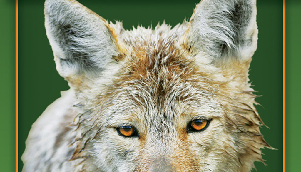 myths_and_truths_about_coyotes_9780897326940_FC-1.jpg