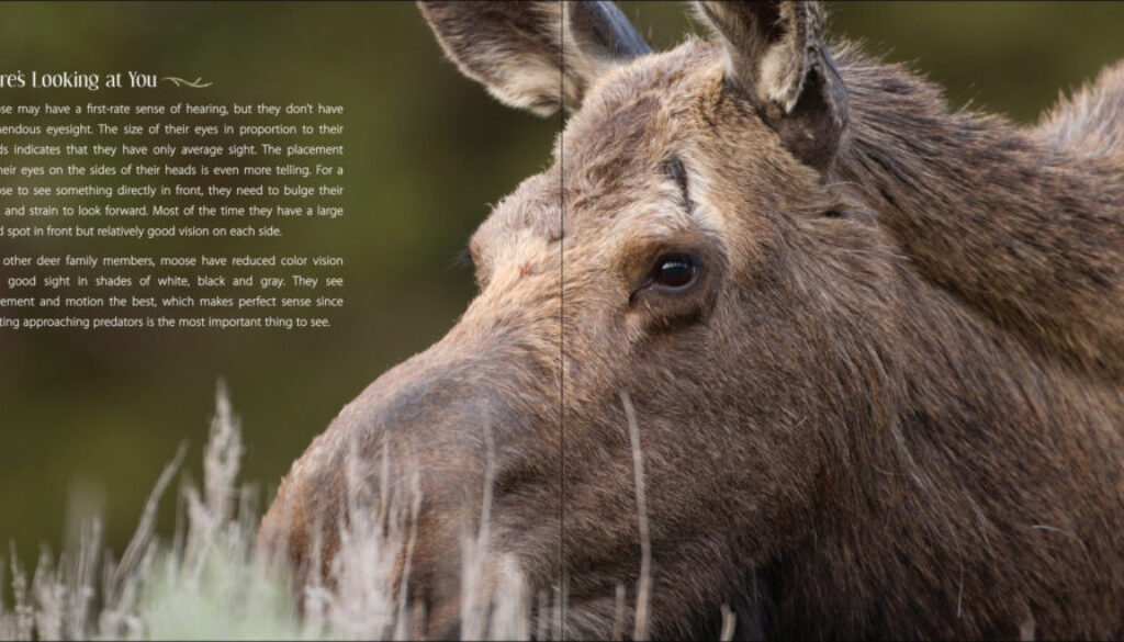 our_love_of_moose_9781591936909_003_iart-scaled-1.jpg