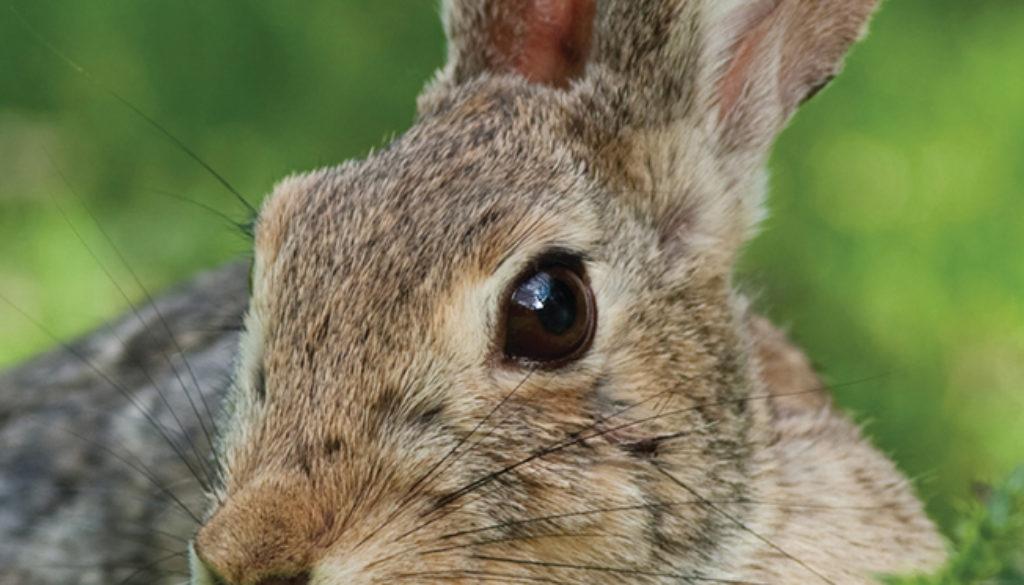 rabbit_blank_journal_lined_9781935666134_FC.jpg