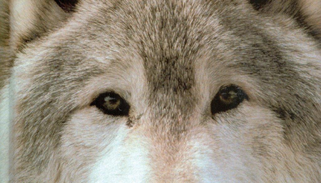 wolf_blank_journal_lined_9781932472219_FC.jpg
